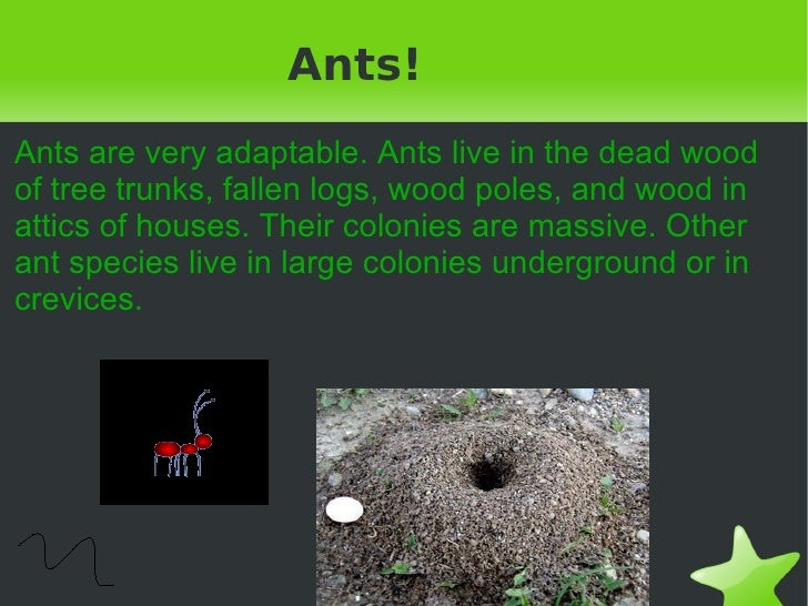 Ants! Ants are very adaptable. Ants live in the dead wood of tree trunks, fallen logs, wood poles, and wood in attics of h...