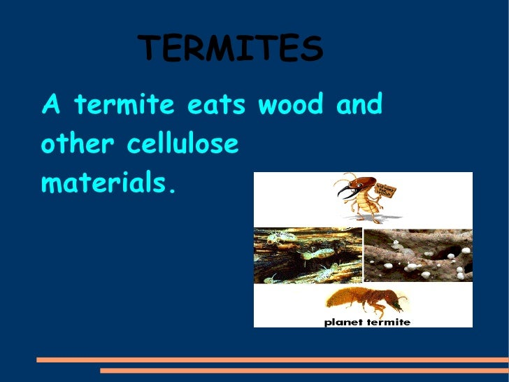 TERMITES A termite eats wood and other cellulose materials.