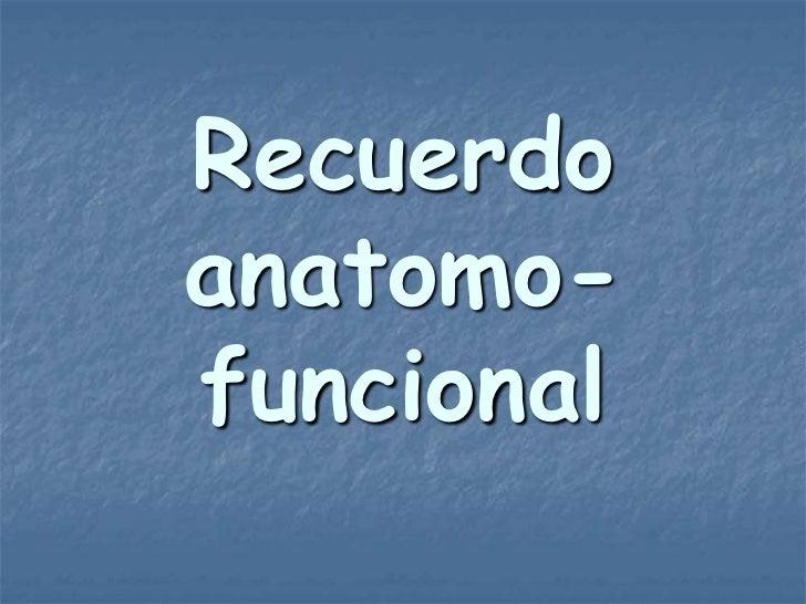 Recuerdoanatomo-funcional