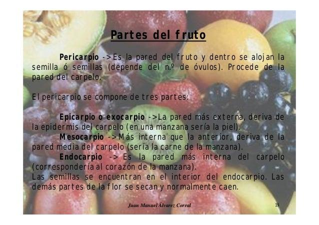 Presentacion morfologia vegetal_ii (1)