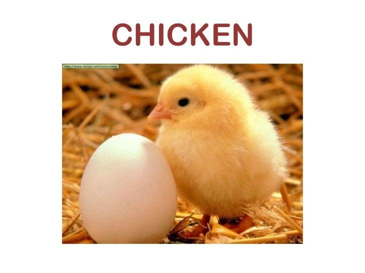 Qué quiere decir chicken en inglés