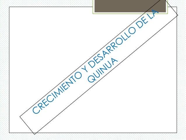 QUINUA REGION PUNONombre Científico :Chenopodium quinoa W.Origen de la especie :El Altiplano PeruanoCaracterísticas delgra...