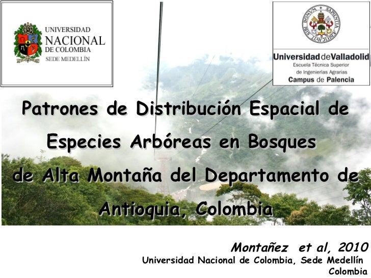 Patrones   de Distribución Espacial de Especies Arbóreas en Bosques  de Alta Montaña del Departamento de Antioquia, Colomb...
