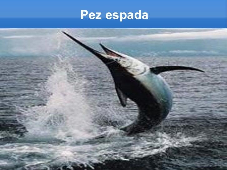 Los peces for Curiosidades del pez espada