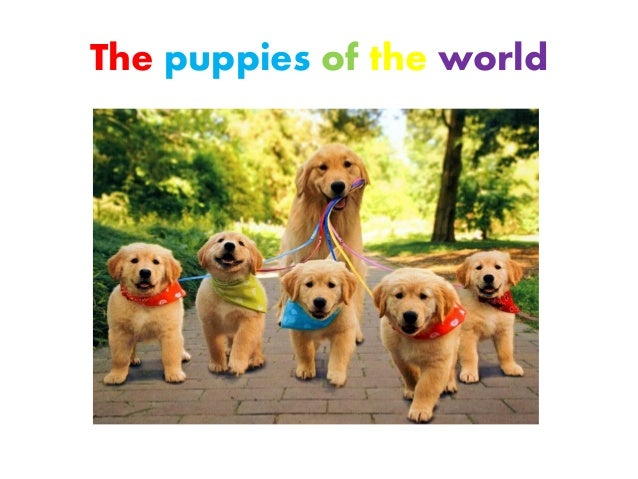 The puppies of the world