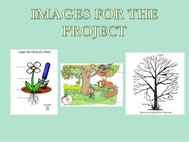 Presentacion plants