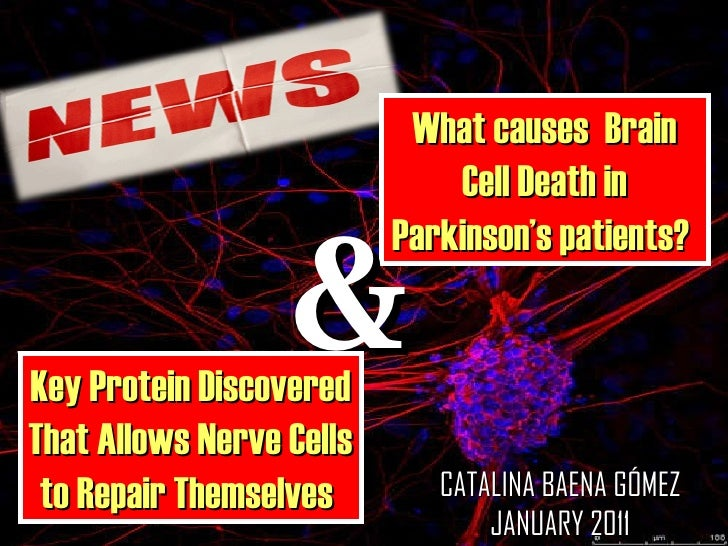 What causes  Brain Cell Death in Parkinson's patients?  & Key Protein Discovered That Allows Nerve Cells to Repair Themsel...