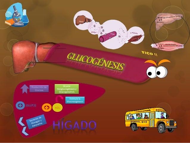 Aprender más sobre metabolismo lento causas