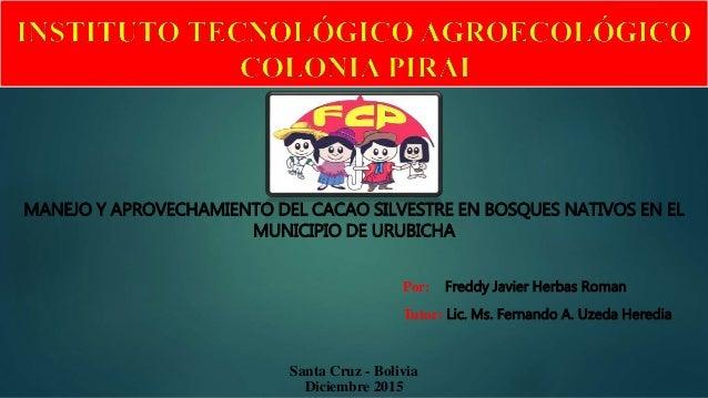 MANEJO Y APROVECHAMIENTO DEL CACAO SILVESTRE EN BOSQUES NATIVOS EN EL MUNICIPIO DE URUBICHA Santa Cruz - Bolivia Diciembre...