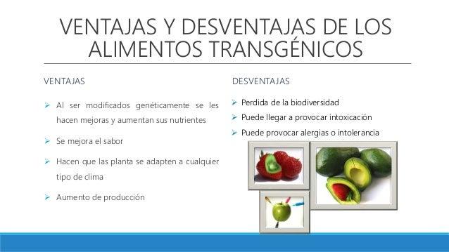 Produccion de ma z transgenico en puebla - Ventajas alimentos transgenicos ...