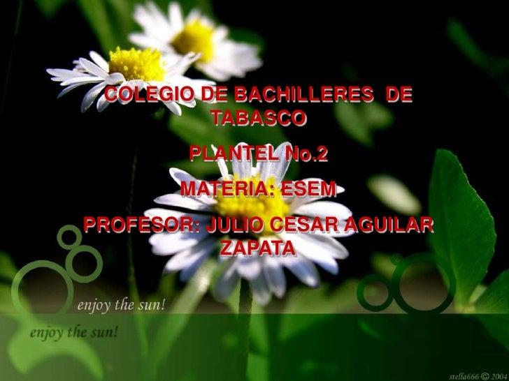 COLEGIO DE BACHILLERES  DE TABASCO<br />PLANTEL No.2<br />MATERIA: ESEM<br />PROFESOR: JULIO CESAR AGUILAR ZAPATA<br />