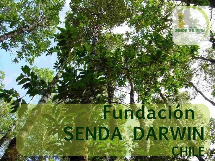 Fundaci ó n  SENDA DARWIN CHILE