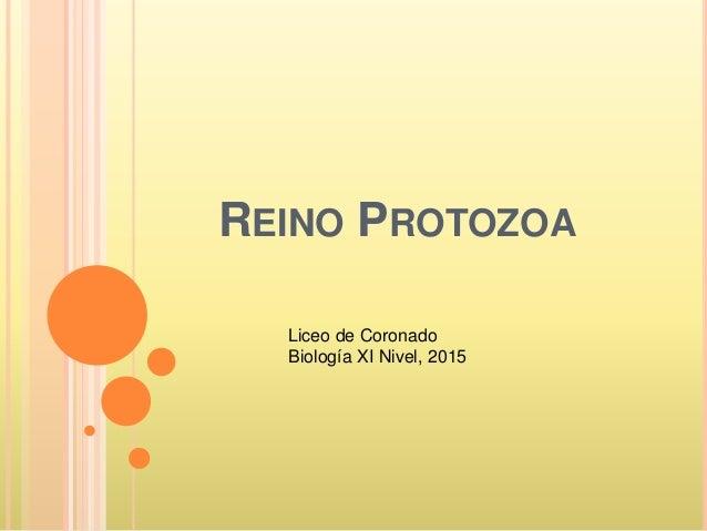 REINO PROTOZOA Liceo de Coronado Biología XI Nivel, 2015