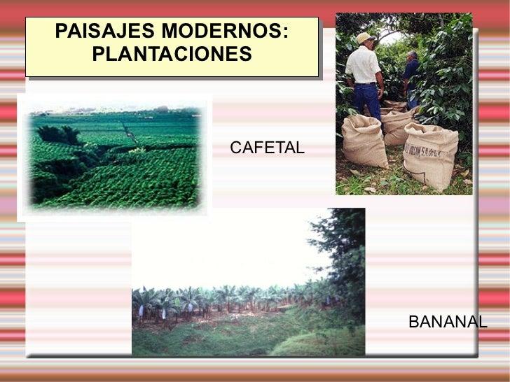 Presentacion sector1 sara for Plantaciones verticales