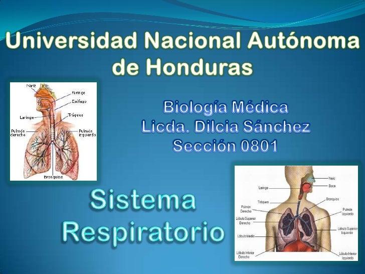 =Sistema Respiratorio= La Respiración Es un acto rítmico formado        por      la inspiración (inhalación o entrada de ...