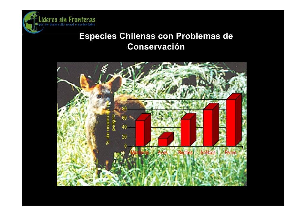 Especies Chilenas con Problemas de           Conservación                             100      % de especies en   80      ...