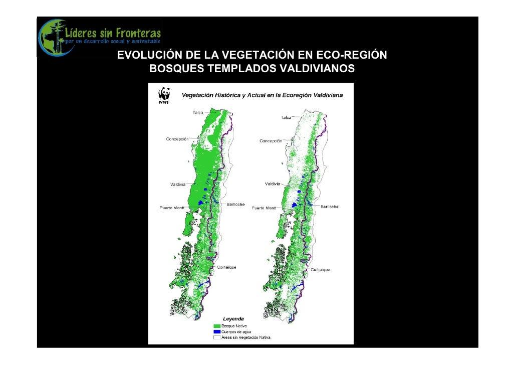 EVOLUCIÓN DE LA VEGETACIÓN EN ECO-REGIÓN     BOSQUES TEMPLADOS VALDIVIANOS