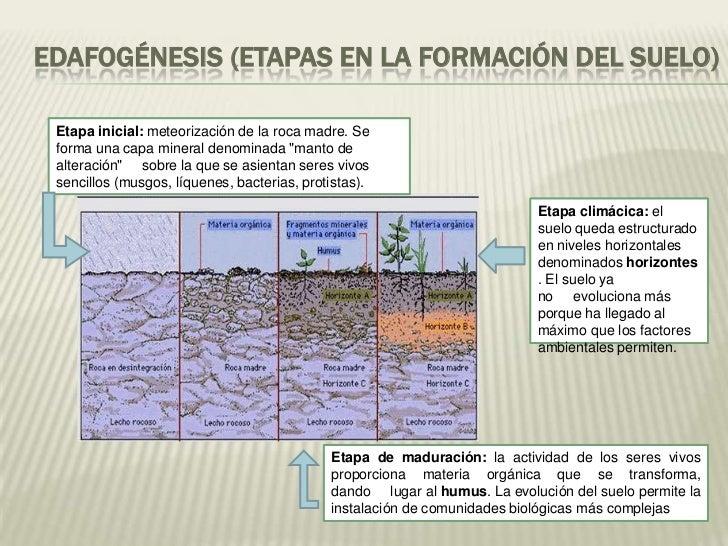 Presentacion tda sobre suelo for Proceso de formacion del suelo