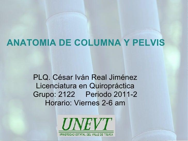 Temario AnaToMia De CoLumNa y PeLviS (Quiropractica/UNEVT)