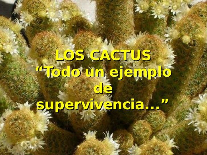 """LOS CACTUS """"Todo un ejemplo de supervivencia..."""""""