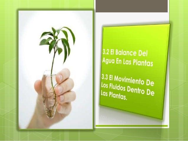 Las Plantas Dependen Del Agua De                            Muchas Maneras                              El agua es el med...
