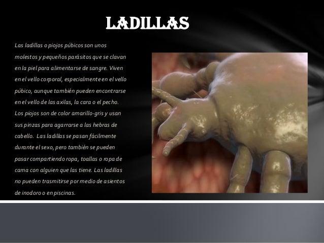 Presentacion tic condons for Piscina hongos genitales