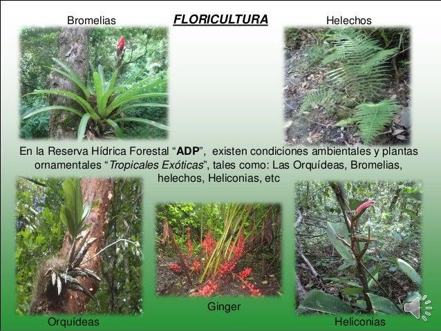 Reserva h dridica forestal de adp malacatoya san jos de for Plantas forestales