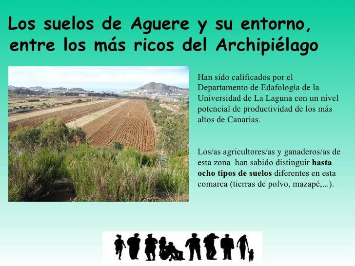 Los suelos de Aguere y su entorno, entre los más ricos del Archipiélago                      Han sido calificados por el  ...