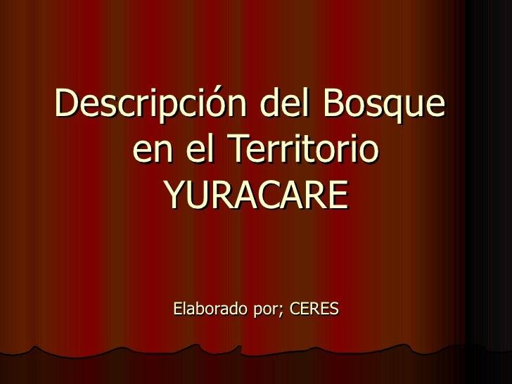 Descripción del Bosque  en el Territorio YURACARE Elaborado por; CERES