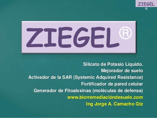 ZIEGEL ® Silicato de Potasio Líquido. Mejorador de suelo Activador de la SAR (Systemic Adquired Resistance) Fortificador d...