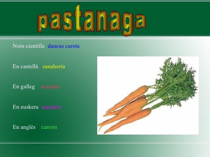 <ul><li>Nom científic  daucus carota