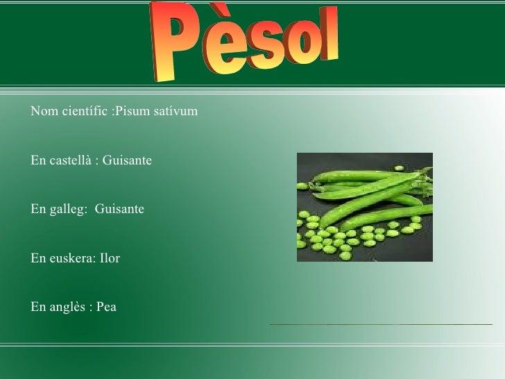 <ul><li>Nom científic :Pisum satívum