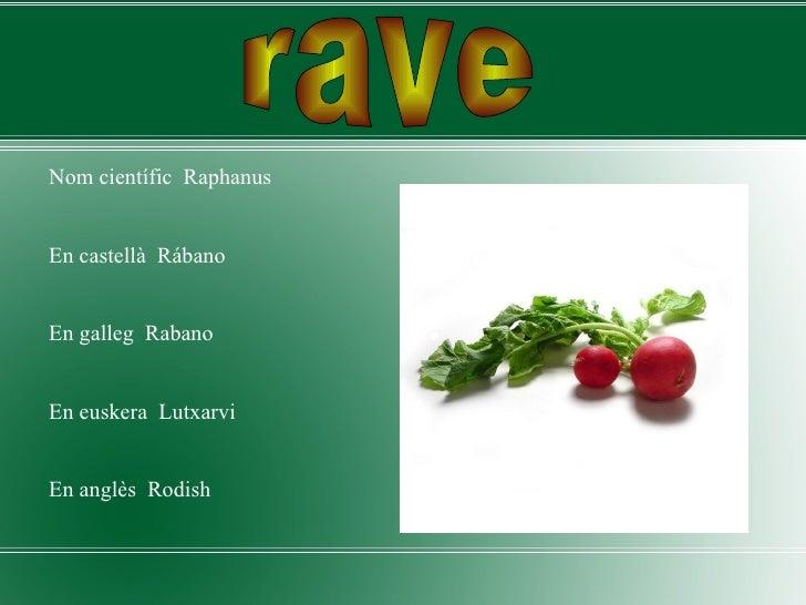 <ul><li>Nom científic  Raphanus