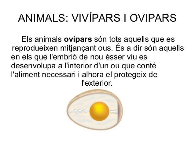 ANIMALS: VIVÍPARS I OVIPARS     Els animals ovípars són tots aquells que es reprodueixen mitjançant ous. És a dir són aque...