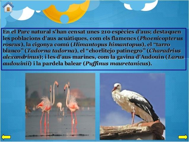 En el Parc natural s'han censat unes 210 espècies d'aus; destaquen les poblacions d'aus acuàtiques, com els flamencs ( Pho...
