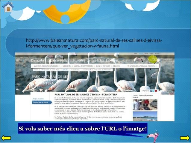 http://www.balearsnatura.com/parc-natural-de-ses-salines-d-eivissai-formentera/que-ver_vegetacion-y-fauna.html  Si vols sa...