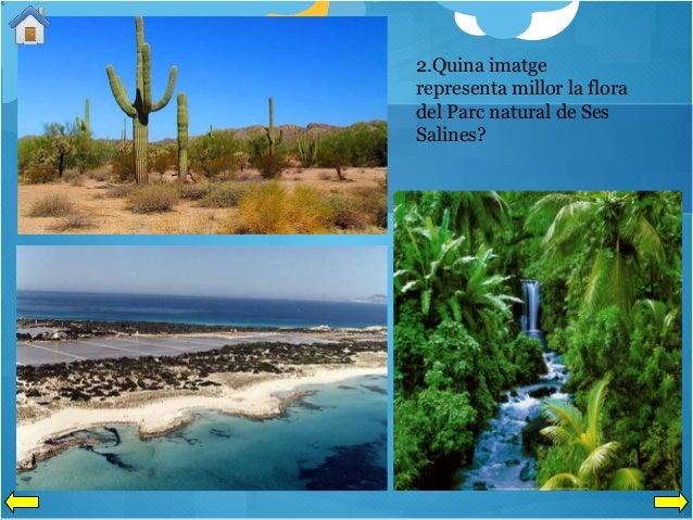 2.Quina imatge representa millor la flora del Parc natural de Ses Salines?