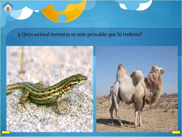 3.Quin animal terrestre es més provable que hi trobem?