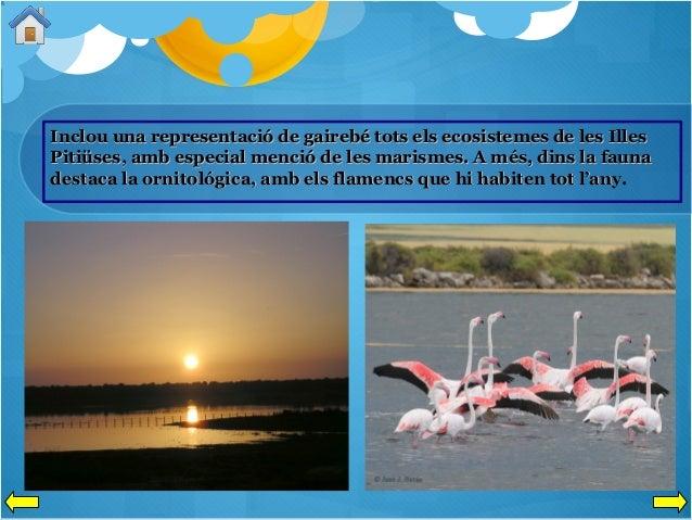Inclou una representació de gairebé tots els ecosistemes de les Illes Pitiüses, amb especial menció de les marismes. A més...