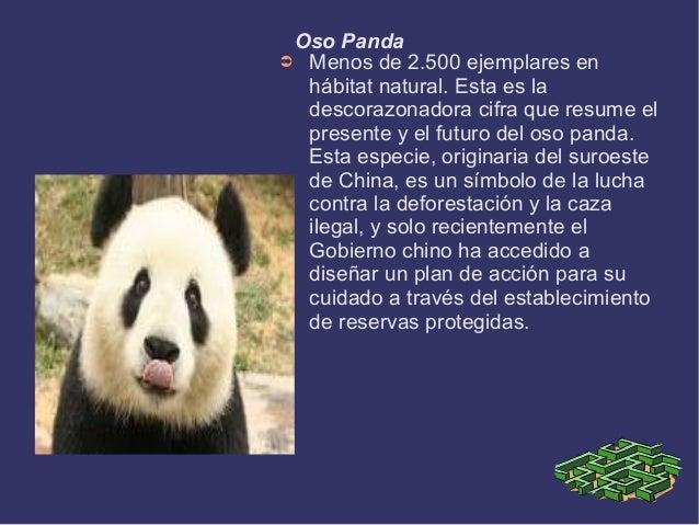 causas de la extinci u00f3n de las especies