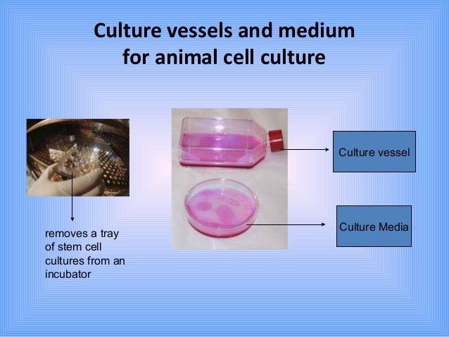 animal cell culture medium pdf