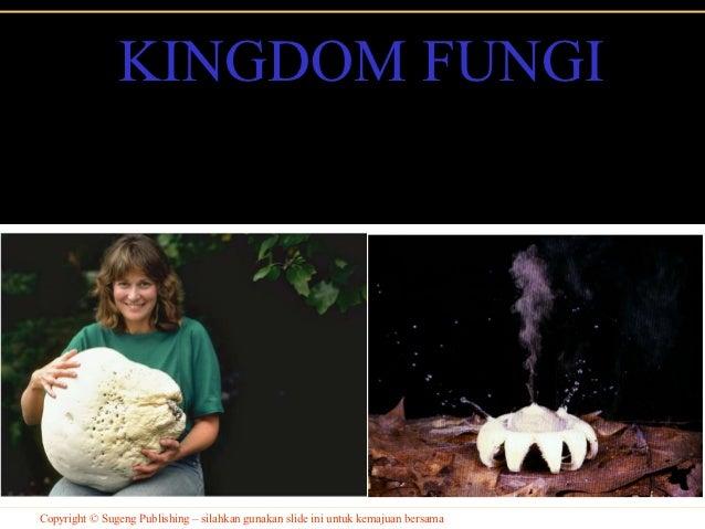 KINGDOM FUNGICopyright © Sugeng Publishing – silahkan gunakan slide ini untuk kemajuan bersama