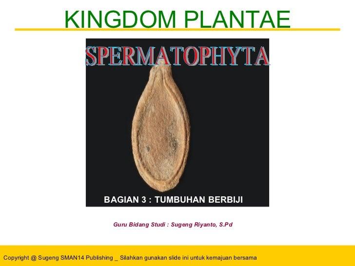 KINGDOM PLANTAE Guru Bidang Studi : Sugeng Riyanto, S.Pd SPERMATOPHYTA BAGIAN 3 : TUMBUHAN BERBIJI