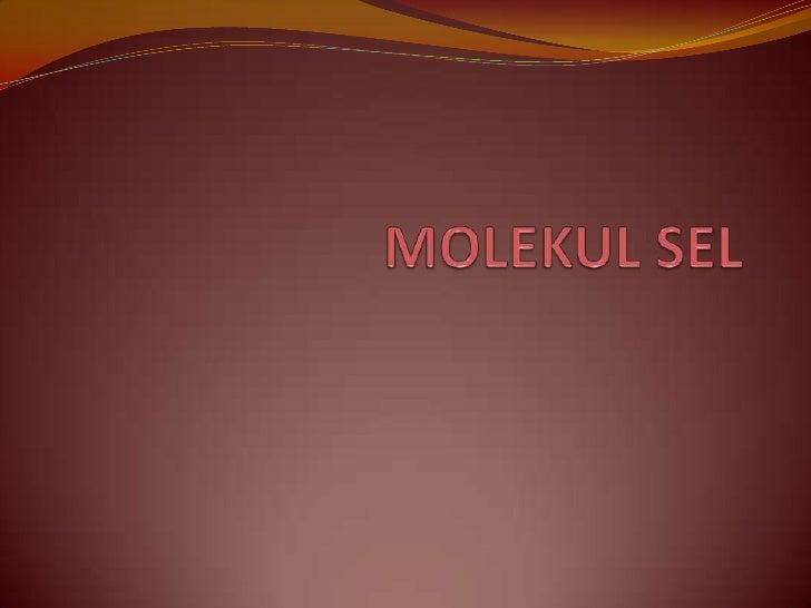 MOLEKUL SEL<br />