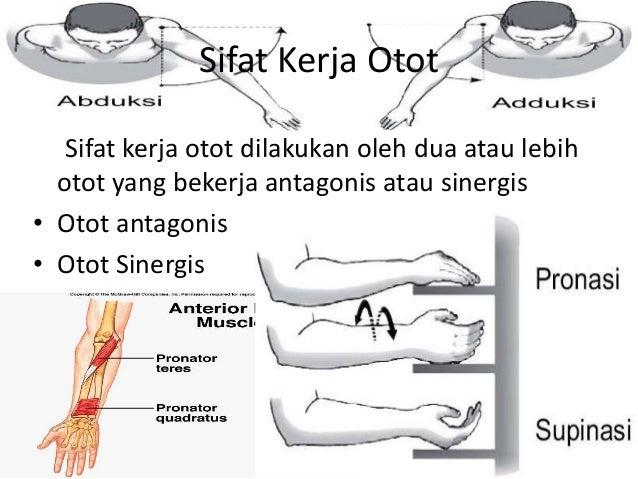Tulang dan Persendian