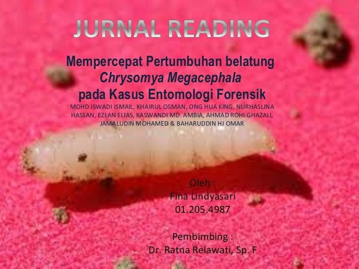 Mempercepat Pertumbuhan belatung  Chrysomya Megacephala   pada Kasus Entomologi Forensik MOHD ISWADI ISMAIL, KHAIRUL OSMAN...