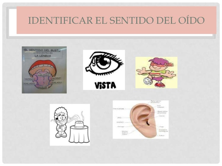 los organos de los sentidos Slide 2