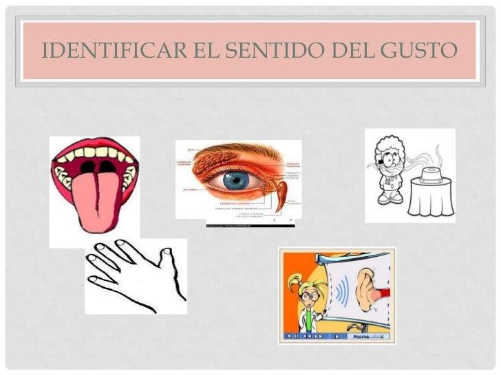 los organos de los sentidos Slide 3