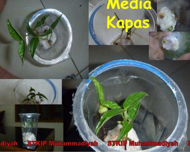Laporan Praktikum Pertumbuhan Tanaman Kacang Hijau Pada Media Yang Be