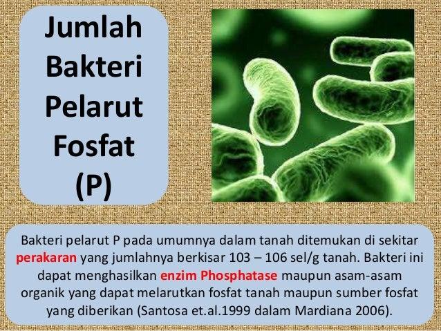 JumlahBakteriPelarutFosfat(P)Bakteri pelarut P pada umumnya dalam tanah ditemukan di sekitarperakaran yang jumlahnya berki...